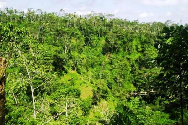 Jual tanah di Ubud view sawah, hutan alami dan tebing tepi sungai – TJUB097