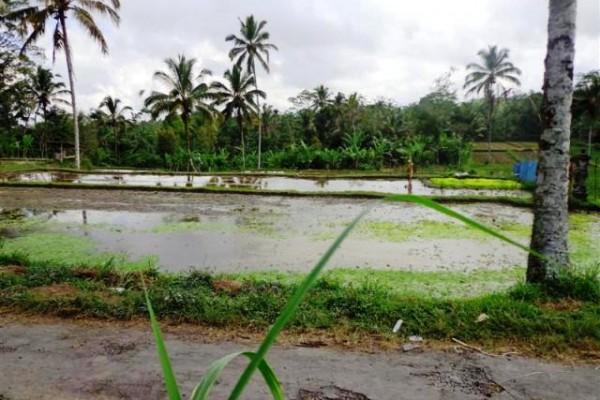 Jual tanah di Ubud Payangan view sawah pinggir jalan – TJUB098