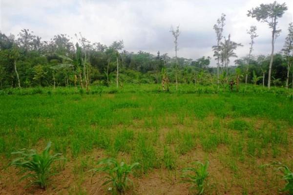 Dijual Tanah Murah Di Ubud – TJUB111
