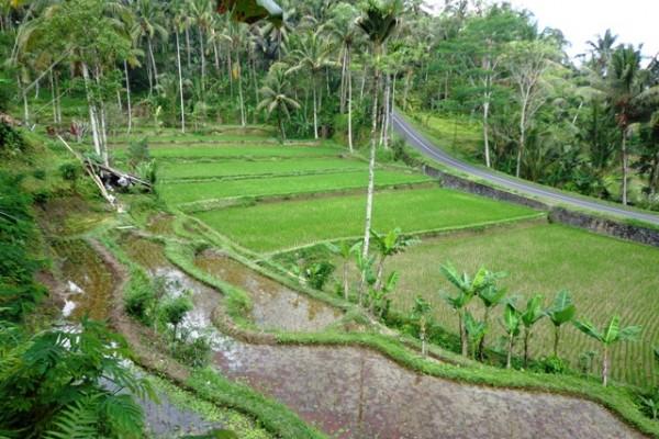 Dijual tanah di Ubud dengan view sawah terasering – TJUB115