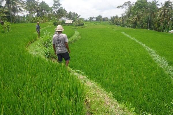 Jual tanah di Ubud tepi sungai Ayung – TJUB129B