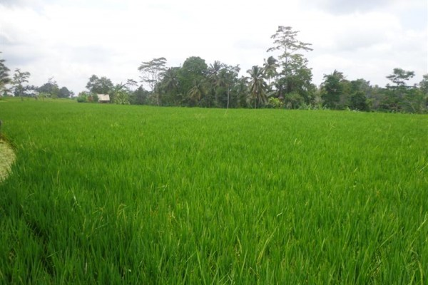 Jual tanah di Ubud tepi sungai Ayung – TJUB129
