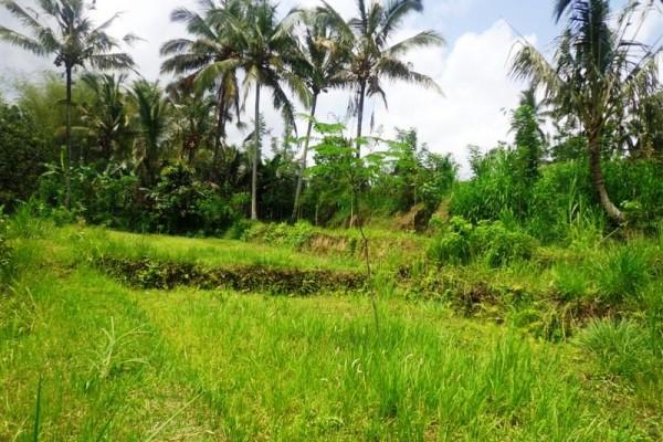 Jual tanah di ubud view tebing tepi sungai Ayung Payangan – TJUB130