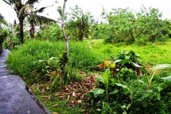 Disewakan tanah di Central Ubud 36 are @ 3 jt/are/th – TSUB001