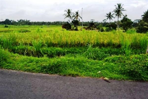 Disewakan tanah di Ubud ( 2jt/are/tahun ) – TSUB003
