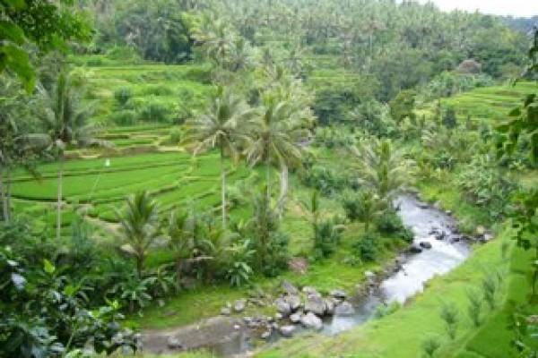 Tanah – tanah dijual di Ubud Bali 10