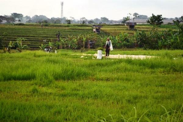 Tanah dijual di Canggu Bali 18 are  view sawah dan Lingkungan villa – TJCG065B