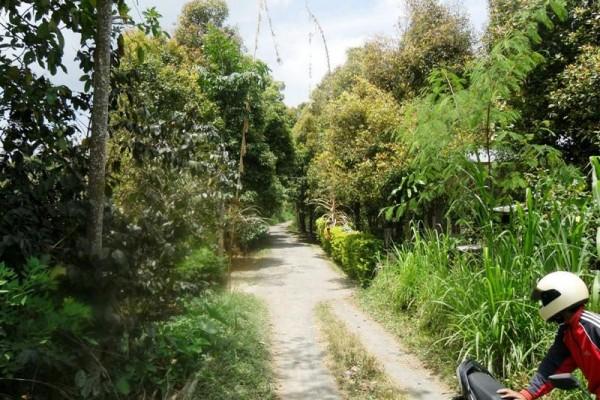 Dijual tanah di Singaraja, Bali – T1037