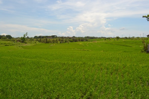 Tanah – tanah dijual di Canggu Bali 1