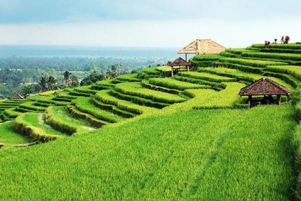 Tanah dijual / disewakan di Bali – Daftar lengkap properti murah di Bali