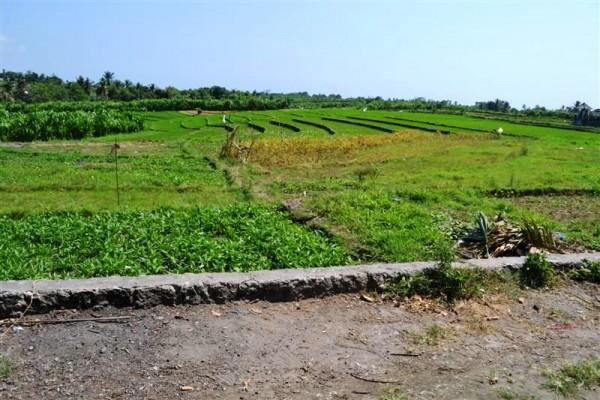 Tanah Dijual di Kerobokan view sawah – TJCG057