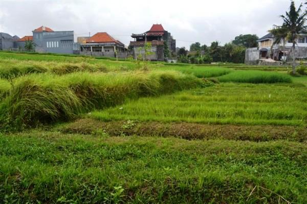 Tanah dijual di Canggu Bali view sawah lokasi di Kerobokan Canggu – TJCG057B