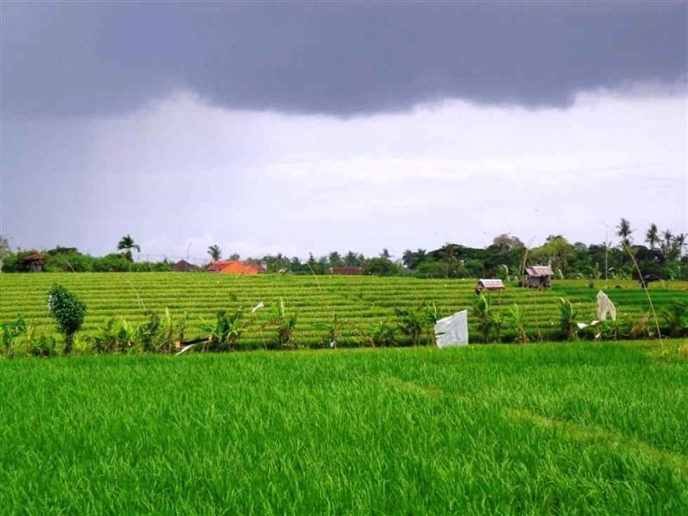 Jual tanah di Canggu Kayu Tulang  65 are TJCG077