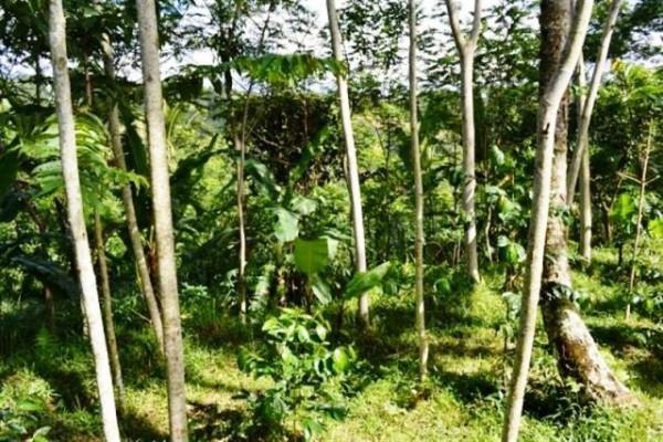 Jual tanah di Ubud view lembah 1 Ha @ 35 Juta