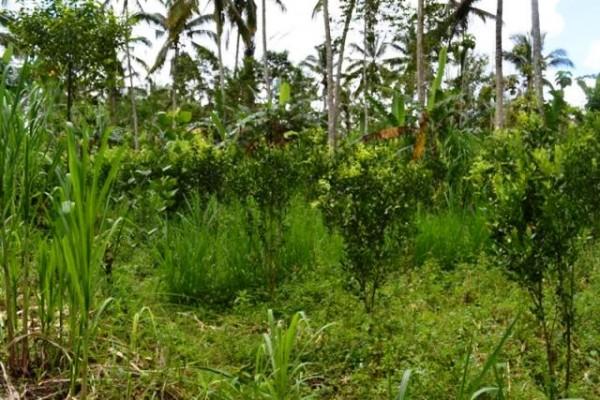 Jual tanah di Ubud view hutan 45 are @ 30 Juta