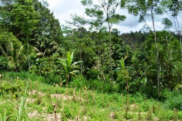 Jual tanah di Ubud view hutan dan sungai 40 are @ 35 Juta