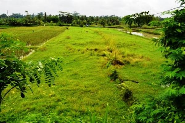 Jual tanah di Ubud view sungai 30 are @ 295 Juta