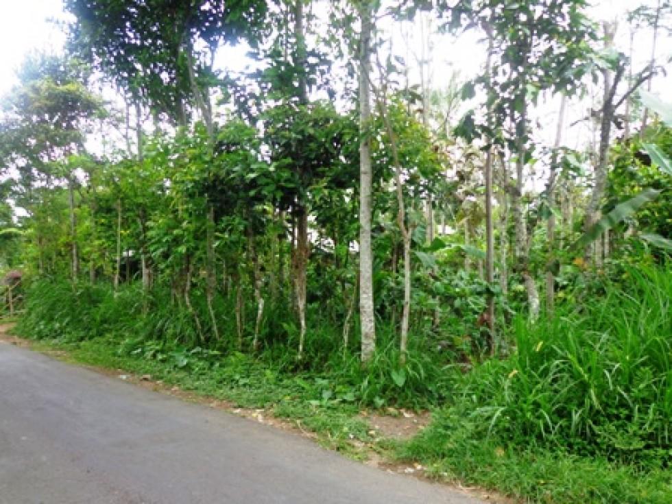Dijual Tanah di Ubud Tegalalang 30 are Pemandangan sawah @ Rp. 39 juta/ are – TJUB134