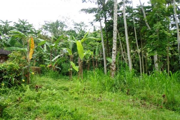 Tanah dijual di Ubud 30 are dekat Istana presiden Tampaksiring – TJUB145