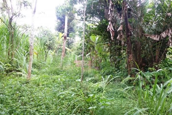 Tanah dijual di Ubud Tegalalang 2000 m2 di pinggir jalan – TJUB147