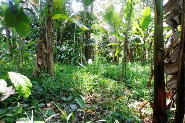 Tanah dijual di Ubud Lokasi di pinggir jalan Payangan – TJUB137