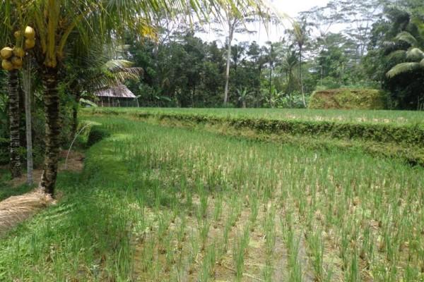 Tanah dijual di Ubud Payangan Bali – TJUB141