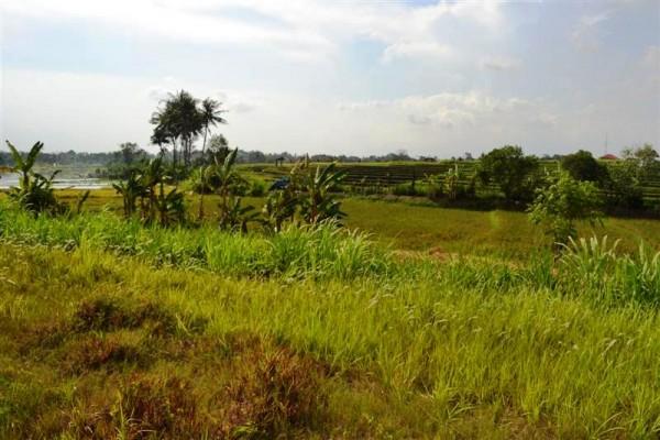 Tanah dijual di Canggu Bali view sawah – TJCG071B
