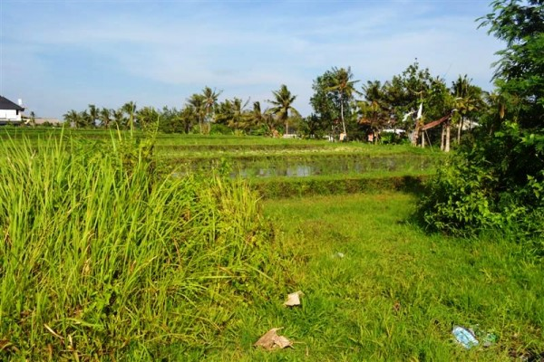 Tanah dijual di Canggu Bali View sawah 10 are – TJCG072B