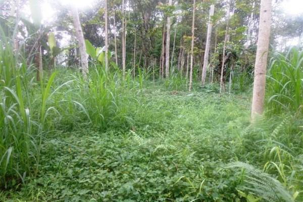Tanah dijual di Ubud lokasi di Pinggir jalan Tegalalang Ubud – TJUB151