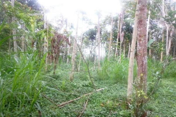 Tanah dijual di Ubud View sungai di Tegalalang Ubud – TJUB151