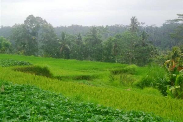 Tanah dijual di Ubud view fenomenal – TJUB152