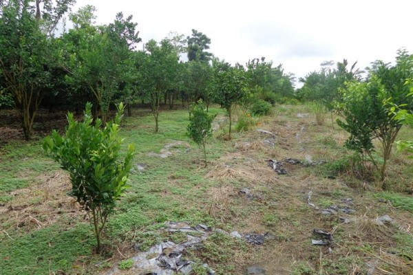 Tanah dijual di Taro Ubud Bali view Pangkung Dan Hutan – TJUB156