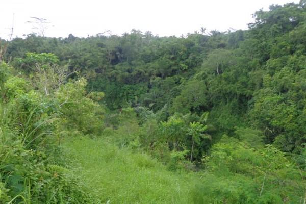Dijual Tanah di taro Ubud Bali view Sungai Dan Hutan – TJUB158