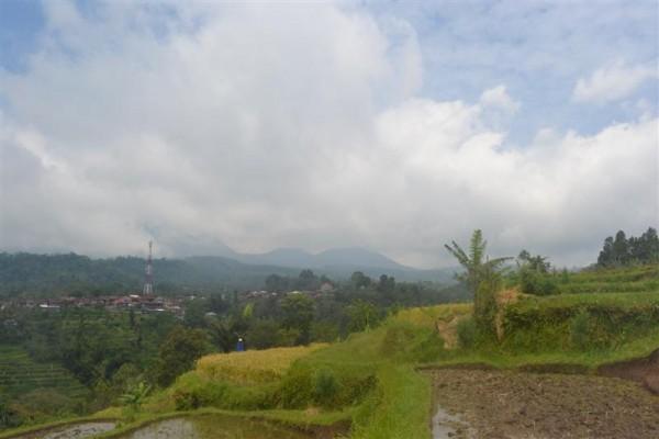 Dijual tanah di baturiti tabanan Bali, view sawah dan gunung (TJBE033)