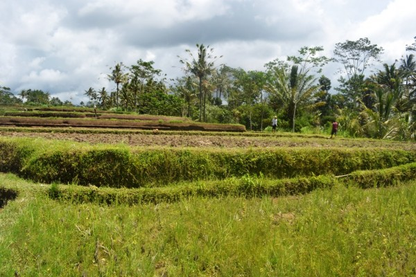 Tanah dijual di Ubud, view sawah T1048