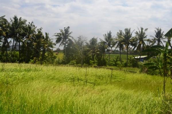 Tanah dijual di Canggu, view sawah dekat pantai Brawa TJCG085
