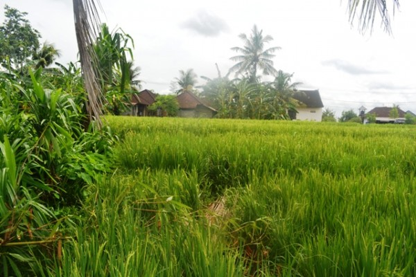 Tanah dijual di Canggu Babakan view sawah TJCG086
