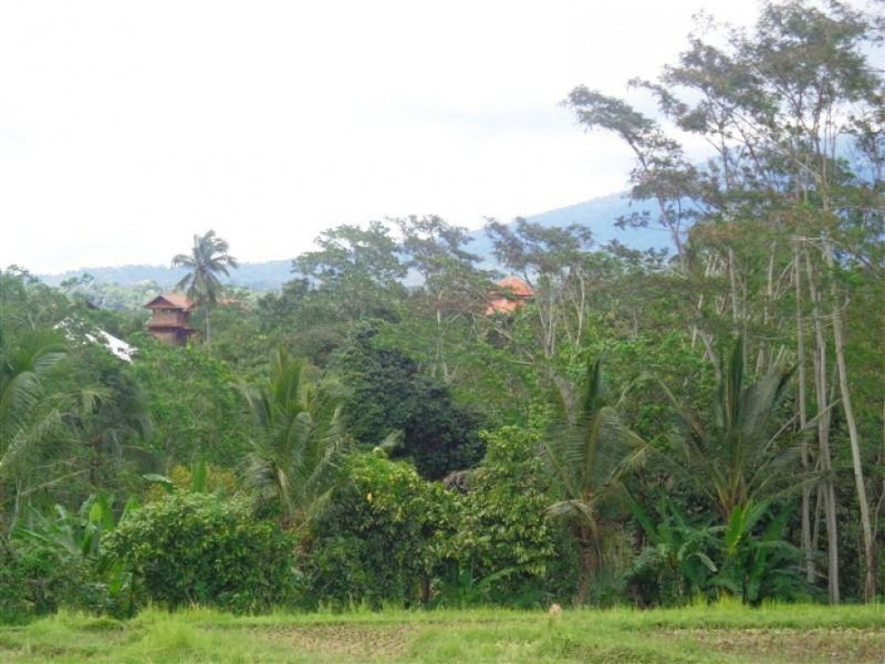 Tanah dijual di Tabanan View cantik alami ke Sawah Dan Gunung – TJTB014