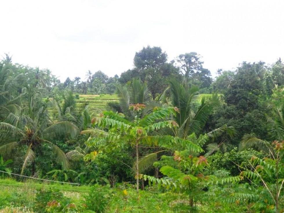 Tanah dijual murah di Penebel Tabanan Bali,View Sawah Dan Gunung – TJTB015