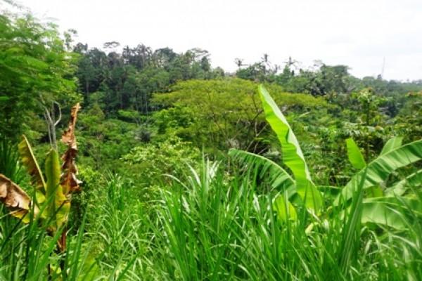Tanah dijual di tegalalang Ubud Bali view Hutan Dan Sungai – TJUB154