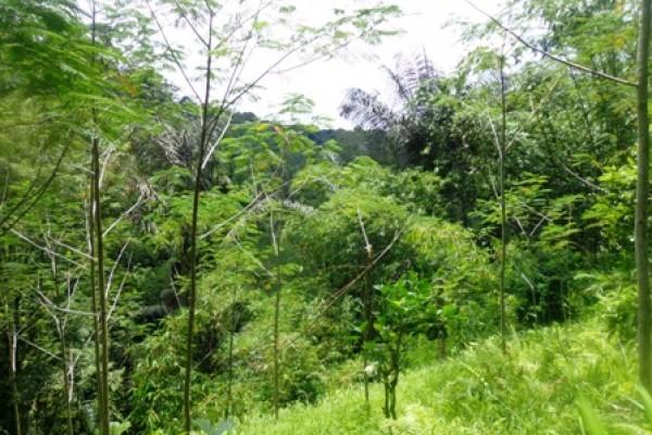 Tanah dijual di Bagus jati  Ubud Bali view Sungai Dan Hutan – TJUB155