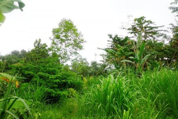 Tanah dijual di Ubud cantik dan subur – TJUB160