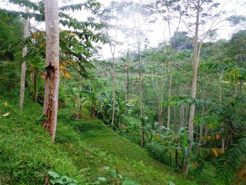 Tanah dijual murah di Ubud view sawah dan hutan (TJUB163)