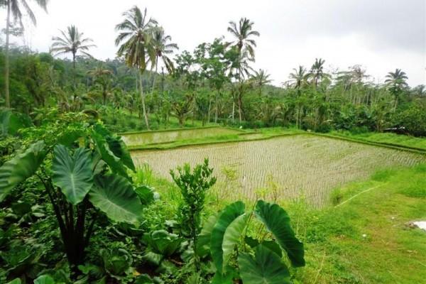 Tanah dijual di payangan Ubud Bali, view sungai,tebing,sawah – TJUB164
