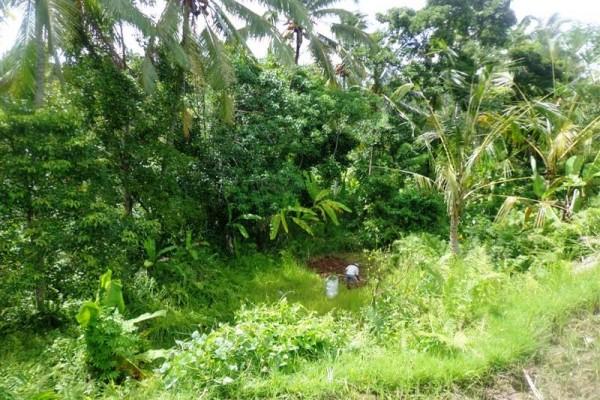 Dijual tanah di Ubud Bali,view sawah, hutan,sungai  ( TJUB168 )