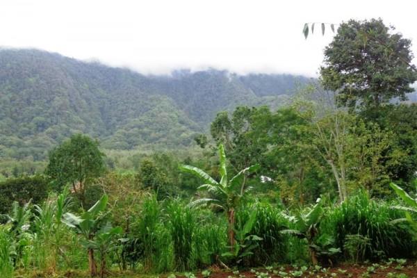 Jual tanah di Bedugul Tabanan Bali 7,85 are view Gunung TJBE028