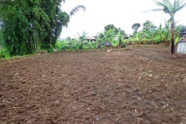 Dijual  tanah murah di Bedugul Tabanan Bali 7,85 are view Gunung TJBE028