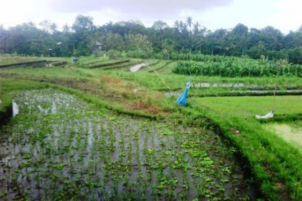 Jual tanah di Canggu – TJCG040 dengan view sawah