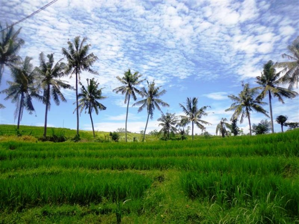 Dijual Tanah di Tumbak Bayuh Canggu Bali,View Sungai Dan Sawah TJCG088