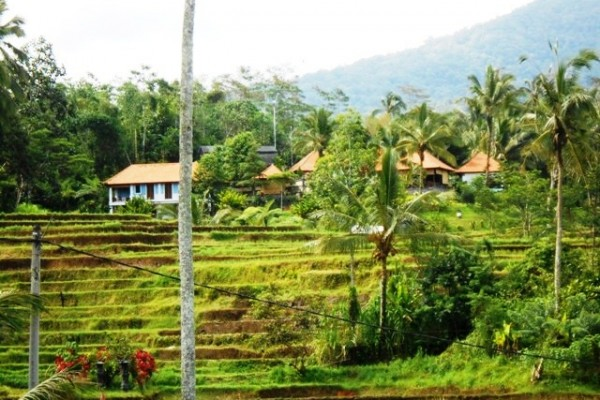Tanah dijual di Tabanan Bali Keindahan dari atas Bukit – TJTB017